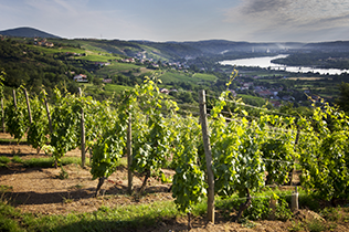 Buy Rhône Valley Wines