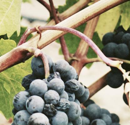 Vins bios