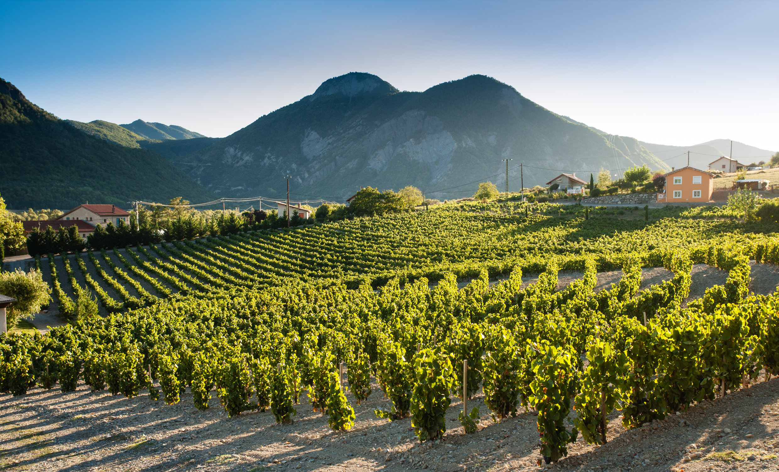 Buy Wines From South Alps