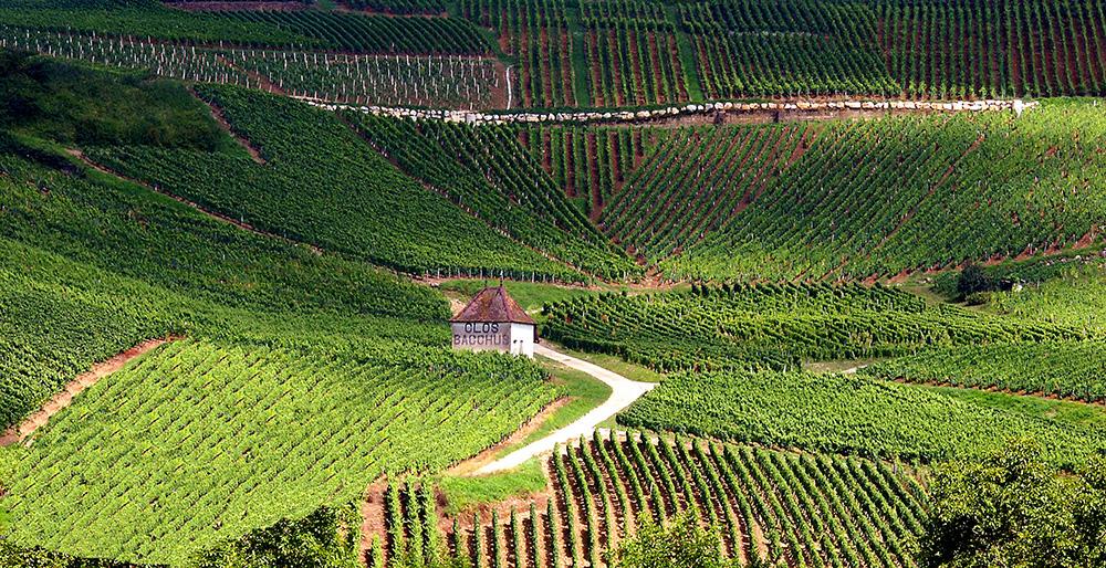 Buy Jura Wines