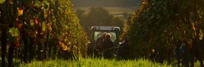 Nos vins de la Foire aux Vins