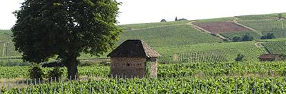 Les vignerons incontournables du Rhône !