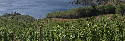 Organic Wines !