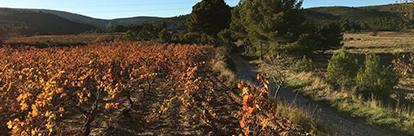 Les vignerons Insolites