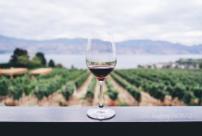 Les vins étonnants