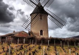 Wine Tour in  beaujolais