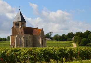 Wine Tour in burgundy