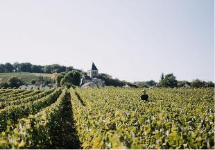 route des vins champagne