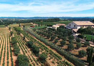 Wine Tour in  languedoc roussillon